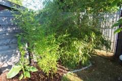 15-08-Bambus 1