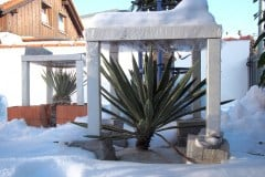 17-01-Yucca gloriosa 01