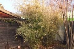 17-02-Bambus 02