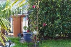 16-04-Magnolia Genie 02
