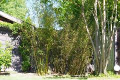 17-05-Bambus 02