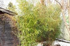 18-03-Bambus 01