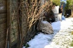 19-01-chinesische Winterblüte 02