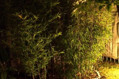 Bambus 2015