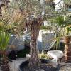Auspflanzung von exotischen Pflanzen: Checkliste 4