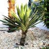 Pflegeleichte exotische Pflanzen für den Garten 3