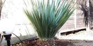 Chronologisches Stammwachstum meiner exotischen Pflanzen