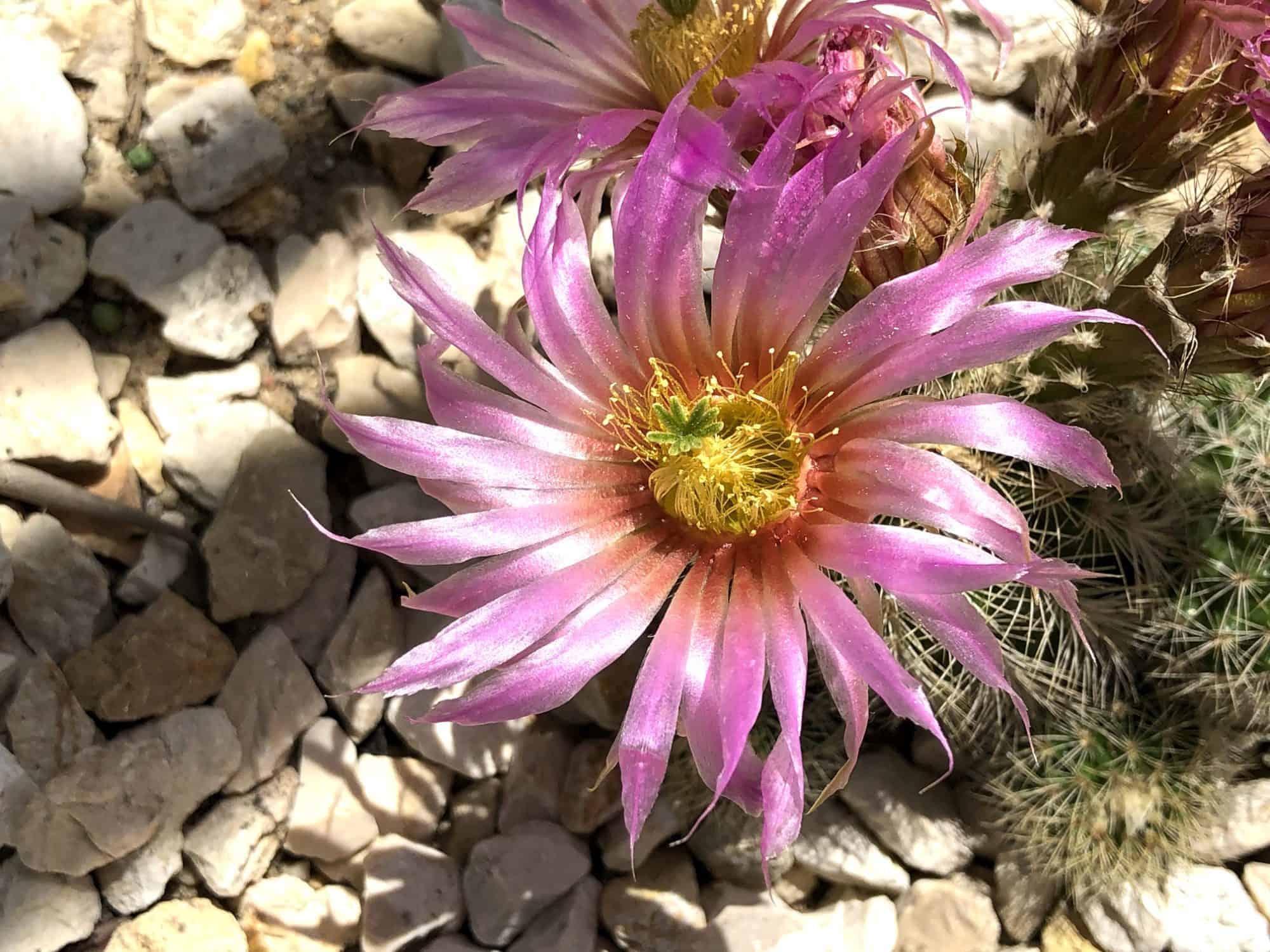 Exotengarten: Blüten 1