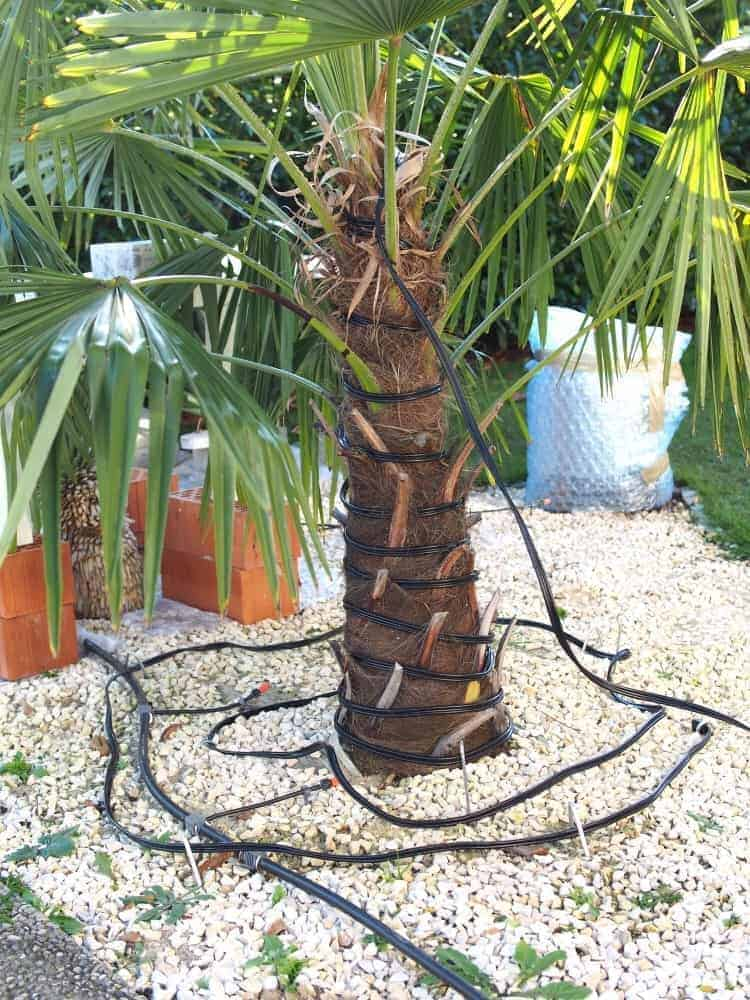 Winterschutz von exotischen Pflanzen 1