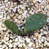 Kaktus: Pflege 8