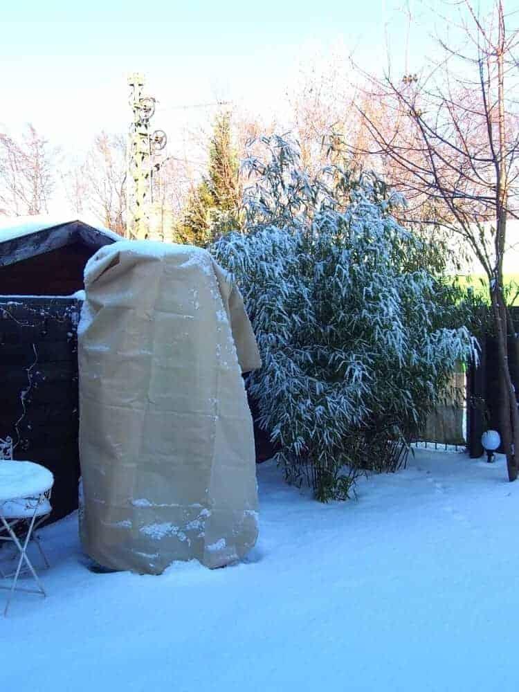Exotengarten: Winter 1